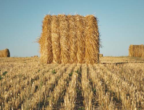 Аграрний комітет продовжив розгляд правок до законопроекту про ринок землі