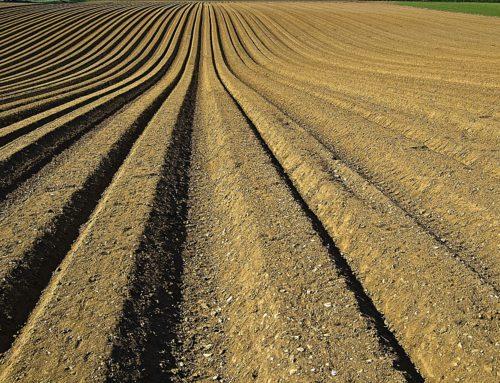UkrLandFarming задіє точне землеробство на 2,4 тис. га