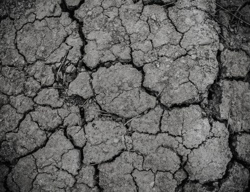 3 млн гектарів українських земель знаходяться у зоні критичного дефіциту води